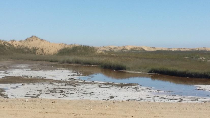 스와코프문트 인근에서 만난 개울 세계 유일의 사막도시라는 스와코프문트 주변에는 이 물이 어디서 흘러왔는지 신기하게 도 개울을 만날 수 있었다.