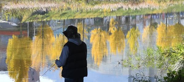 거창 위천천 강물에 비친 은행나무.