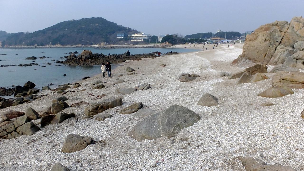 조개껍질로 하얗게 변한 용유도 선녀바위해변.