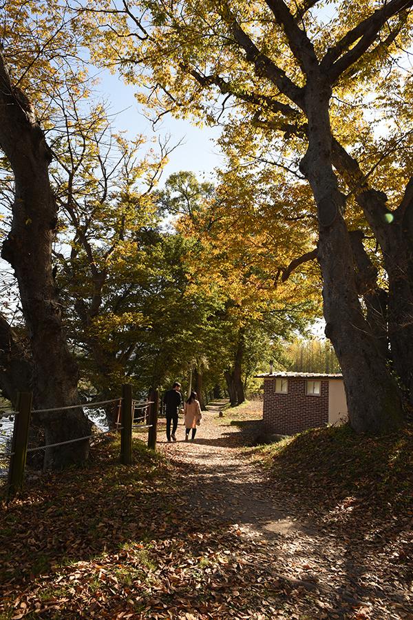 가을 숲정이길을 다정하게 걷고 있는 사람들.