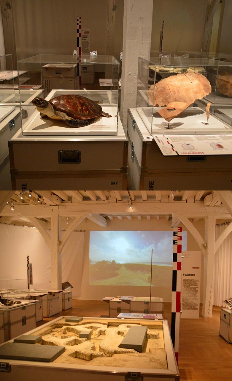 트로믈랭 섬 유물 트로믈랭 섬의 바다거북과 생존자들이 살던 유적이 재현되어 있다.