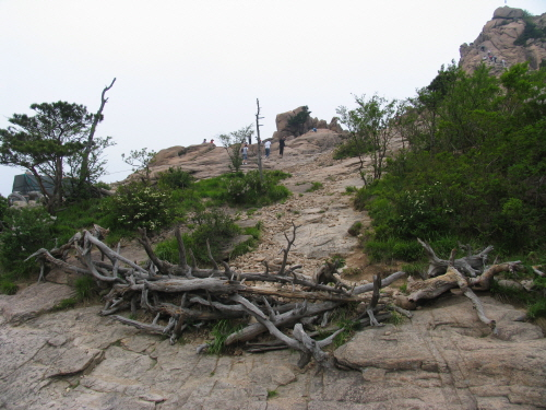 사람들 발길에 초토화된 설악산국립공원 권금성