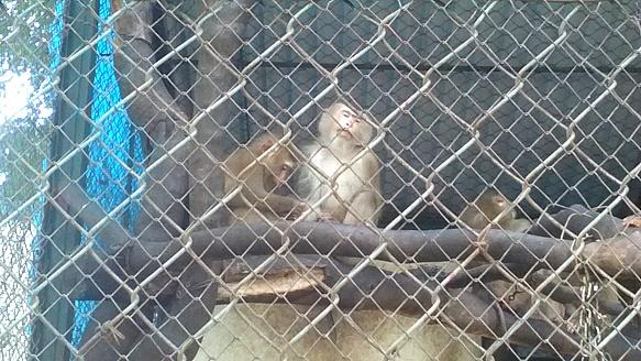 베트남 하노이 뚜레(Thu Le) 동물원 동물들