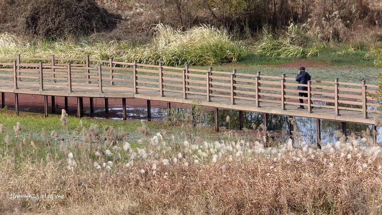 2004년 국내 최초로 지정된 영산강변의 담양하천습지보호지역.