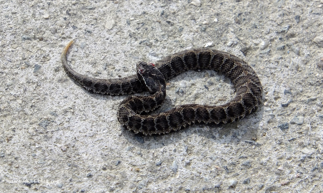 강둑길에서 마주친 뱀.