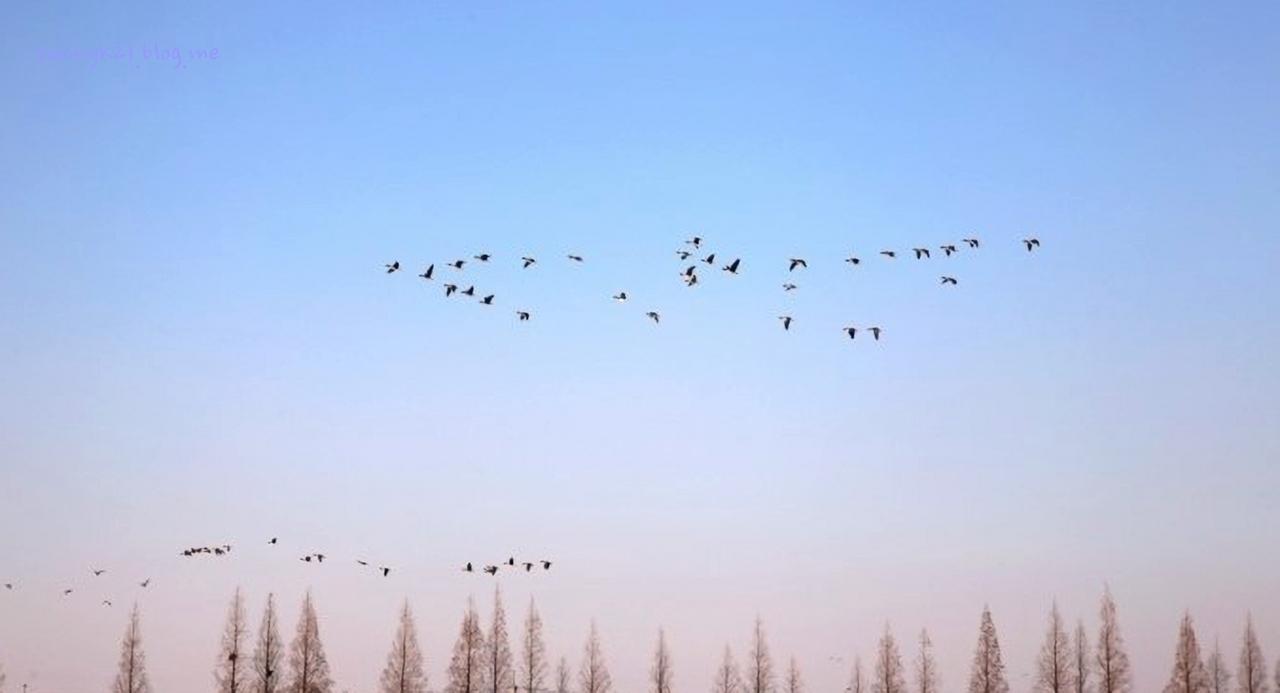강변 정자 면앙정에서 보이는 초겨울 하늘.