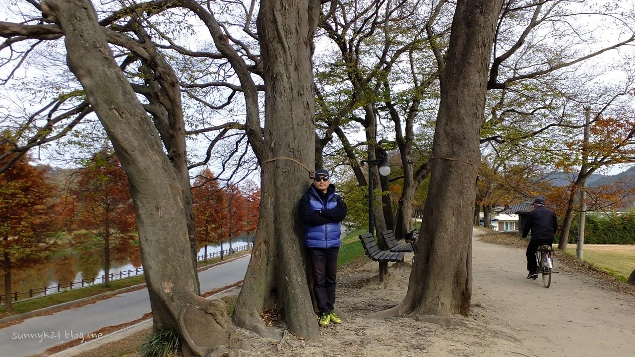 천연기념물이 된 푸조나무, 팽나무, 느티나무이 운치있게 늘어선 담양천 둑길.