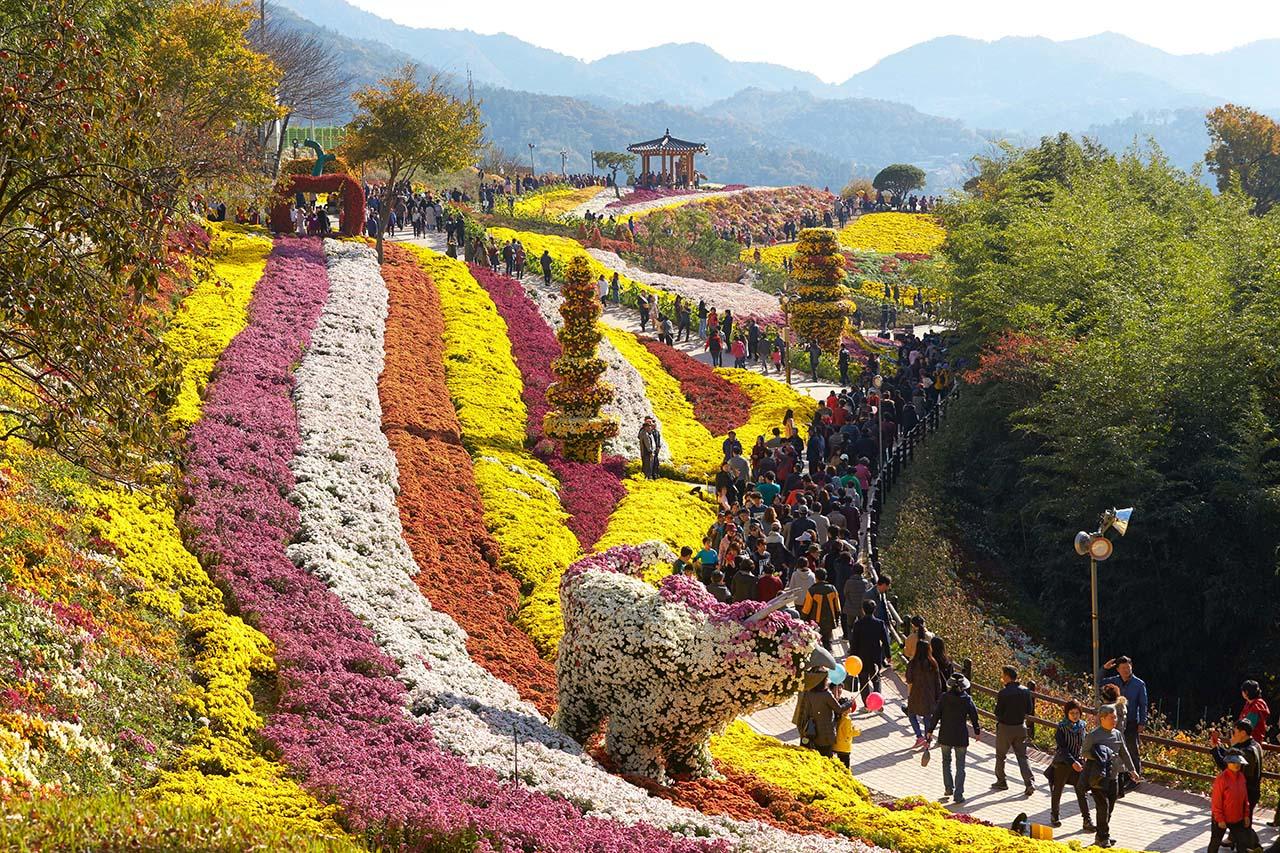 전남 화순군(군수 구충곤)이 연 '2017 국화 향연'에 약 48만 명이 다녀갔다.