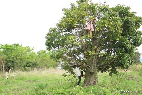 나무 타는 시골순이 시골돌이