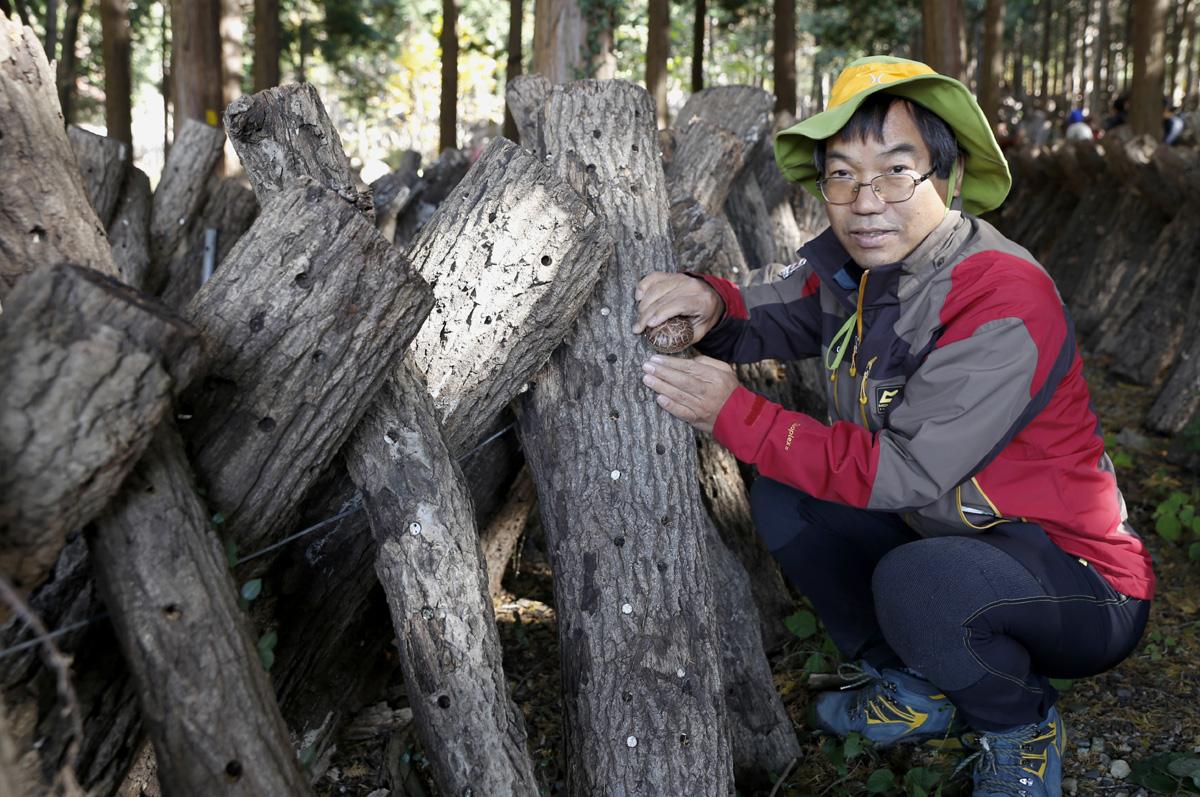 김갑주 회장이 지난 11월 전남 강진의 초당림에서 표고버섯 따기 체험을 하고 있다. 대학생 때 시력을 잃고 1급 시각장애인이 된 김회장은 지금 음식산업 CEO로 살며 광주광역시 시각장애인연합회장을 맡고 있다.