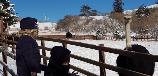 지난 25일 찾은 강원도 대관령의 한 목장 풍경.