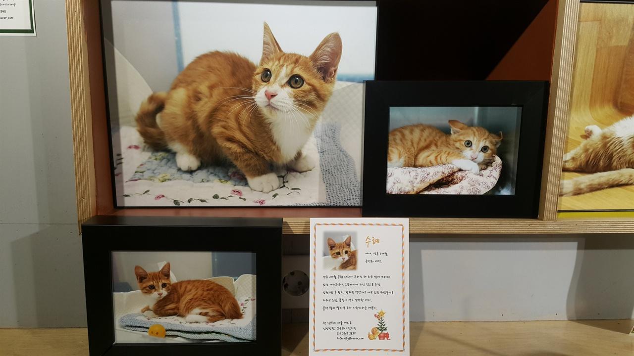 고양이 쉼터 '여의도냥'에서 보호 중인 고양이 수혜 .