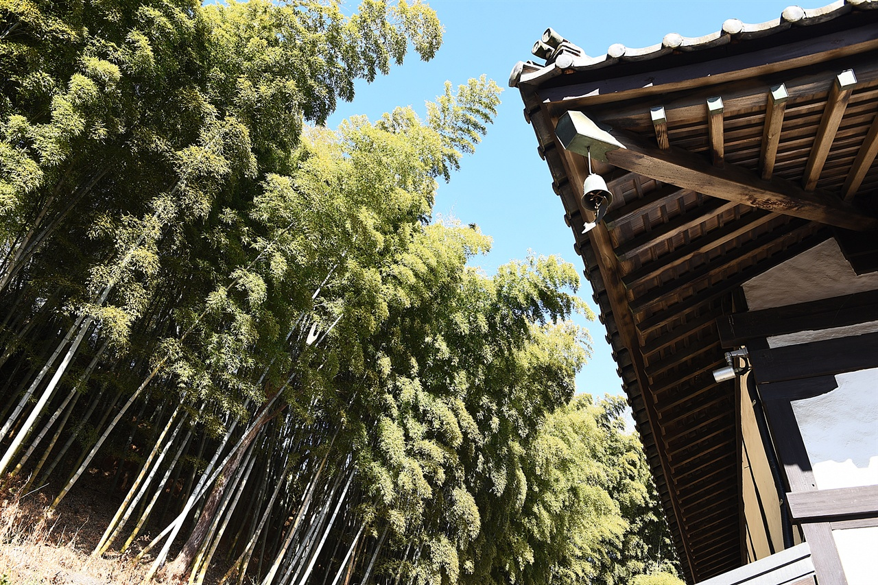 동국사 대나무숲 동국사 뒤편에는 일제 강점기 당시 사찰에서 조성한 대나무숲이 있다