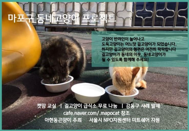 마포구동네고양이프로젝트 행사 웹자보 .