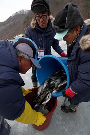 고기 떨어질라~ 8일 2018화천산천어축제장에서 주민들이 산천어맨손잡기 체험장에서 사용 할 산천어들을 옮겨 담고 있는 모습
