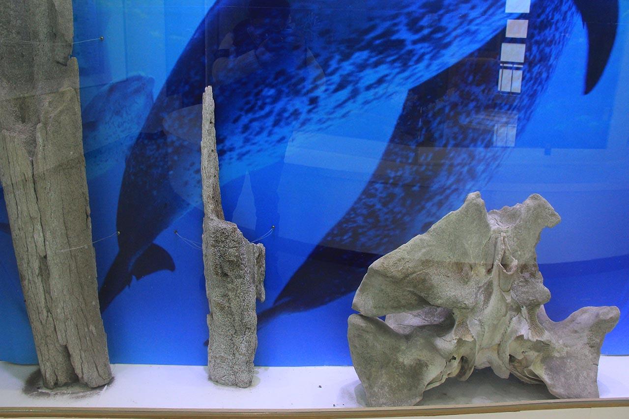 일본인들이 세운 흑산도 예리 곤삐라 신사 도리이를 장식할 때 기둥으로 이용되었던 고래 턱뼈 일부와 그 장식물로 이용되었던 고래 엉치뼈가 흑산도 예리 자산문화관에 전시돼 있다.