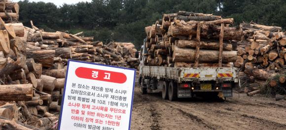 감염된 소나무 적재장소 소나무재선충병 감염된 고사목들을 옮기고 있다.