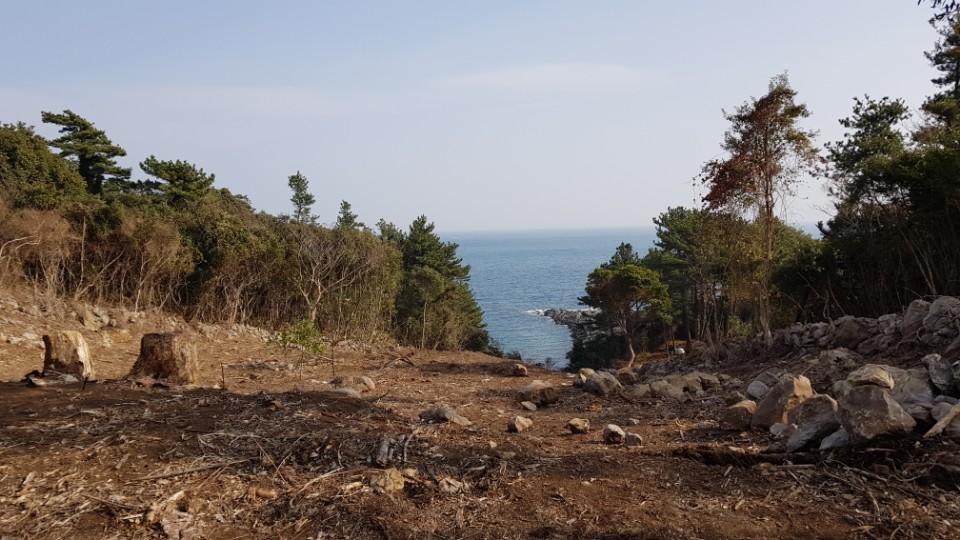 고사목제거 작업지 재선충병 감염된 소나무제거작업현장