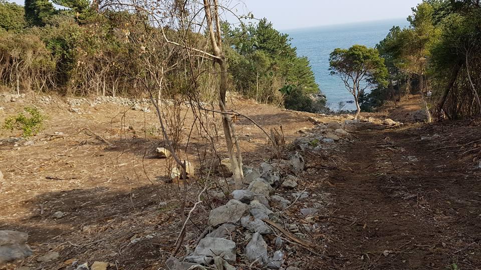 토사 바다유출 숲을 다 밀어버려서 적은 양의 비에도 토사가 쓸려 바다로 들어간다.