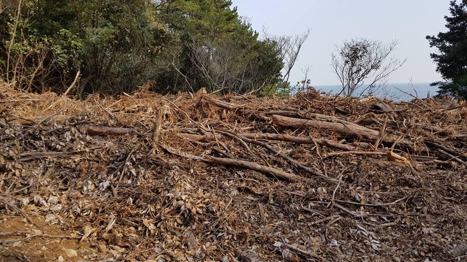 숲이 훼손된채 그대로 방치중 재선충병 감염된 소나무제거작업현장