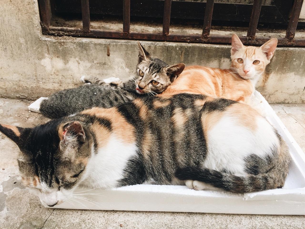 야옹이신문 급식소 고양이들