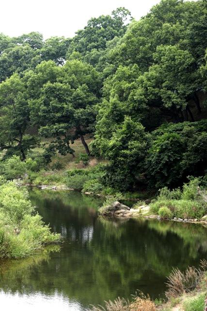 """소나무는 경주의 상징이기도 하다. 옛날과 오늘날의 문헌들은 모두 천경림을 """"소나무와 버드나무가 흐드러진 물가""""라고 쓰고 있다. 원시의 풍광을 간직한 경주 남천 일대."""