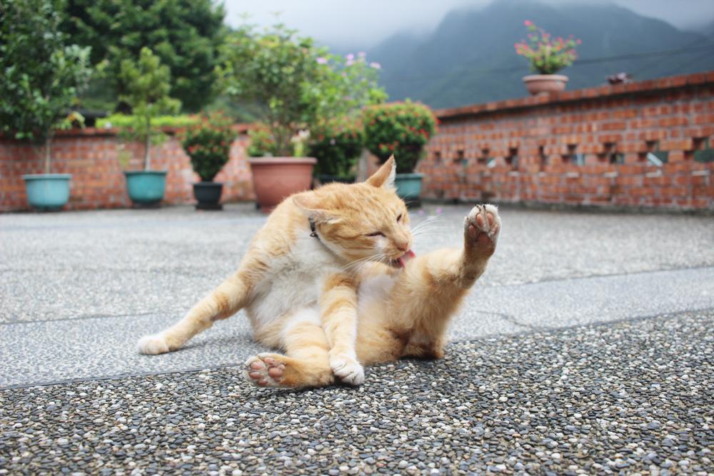 대만의 고양이 마을 허우통에서 만난 길고양이