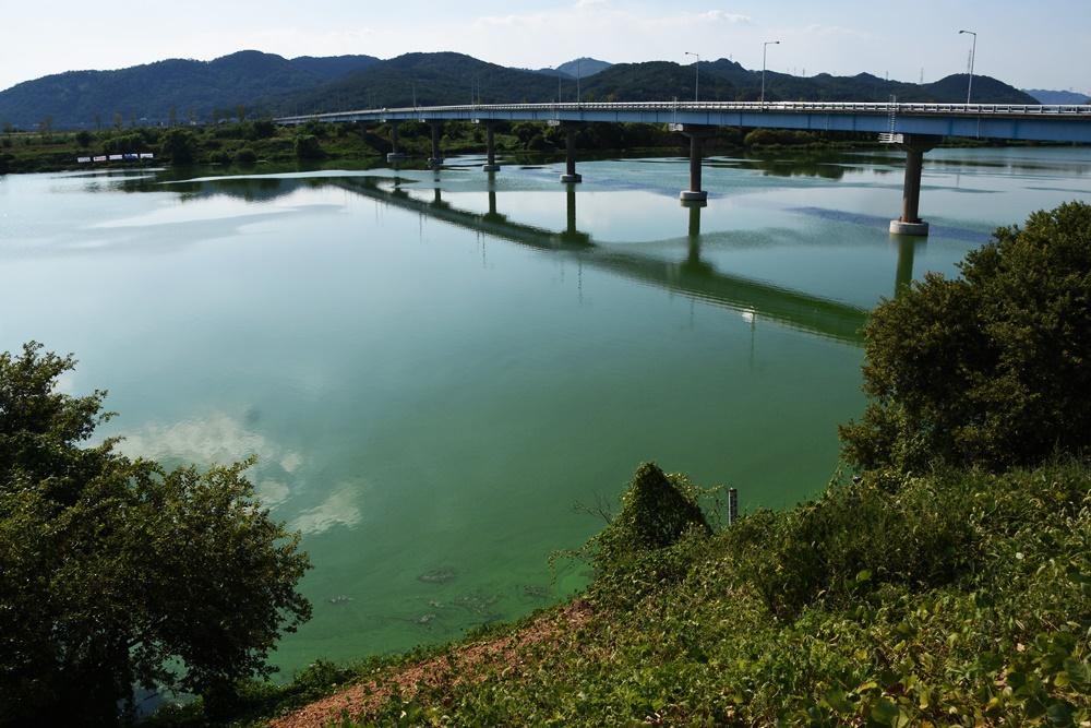 녹조라떼 낙동강. 녹조가 핀 강물이 가득 갇혀 있다. 수문 열기 전 낙동강 현실이다.