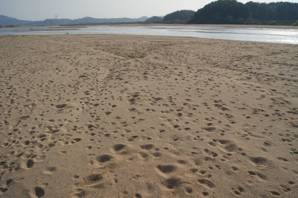 무수한 생명들의 발자국. 강은 야생동물들에겐 마실 물의 공급처란 측면에서 반드시 필요한 공간이다. 모래강 내성천의 생명의 질서를 느끼게 만드는 장면이 아닐 수 없다. 모래강 내성천의 아름다운 모습.