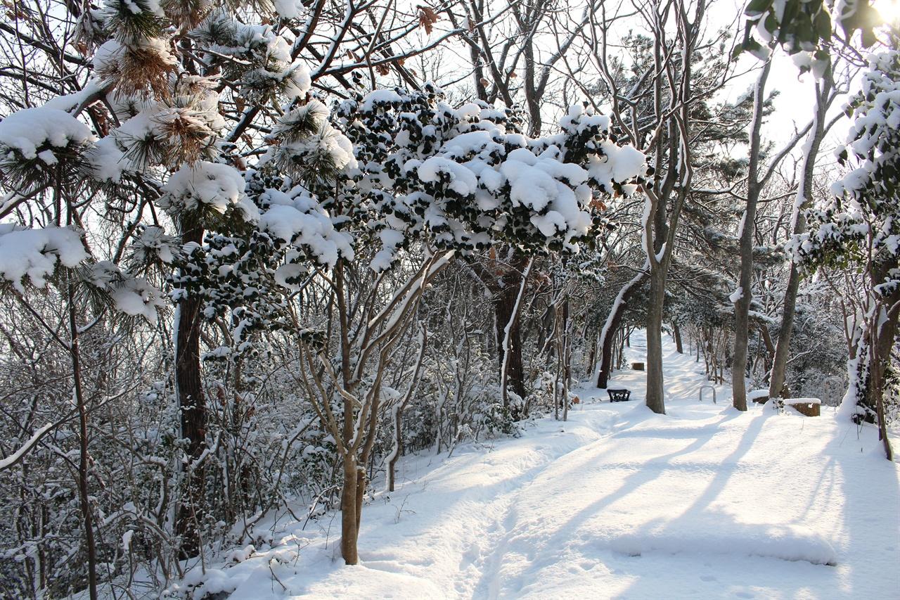 삼학산 정상 가는 길 삼학산 정상 가는 길목의 눈 덮인 나무들 모습