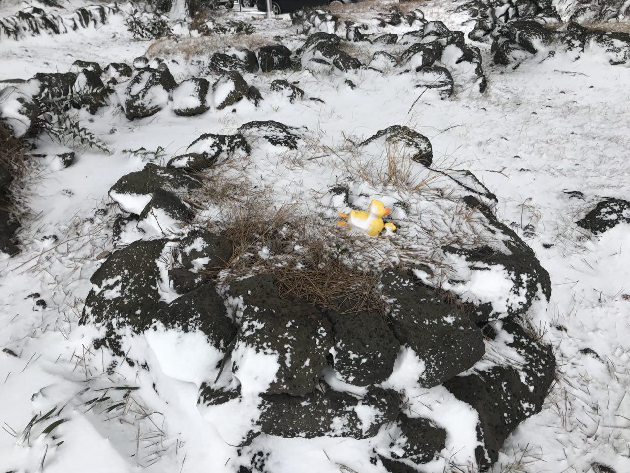 이름 없는 아기 무덤 1948년 집단 학살된 북촌리 마을 주변 너븐숭이에 비석없는 아기 돌무덤위에 노란 오리 장남감으로 영면하길 기원하고 있다