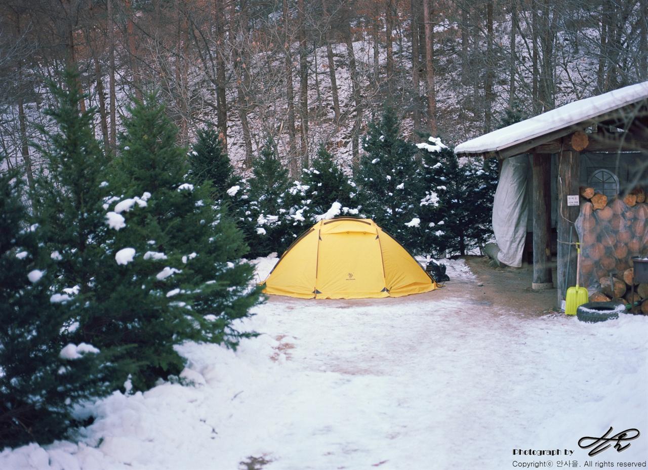 하늘내린터농원 다목적공간 (645N/Portra160)오두막이 한 채 있고 잘 마른 장작들이 쌓여있는, '다목적오두막'. 크리스마스 트리같은 작은 나무들이 바람을 막아주었다.