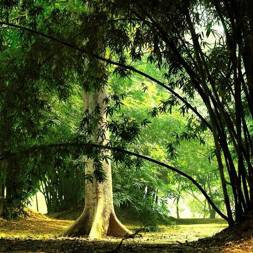 로디가든 대나무