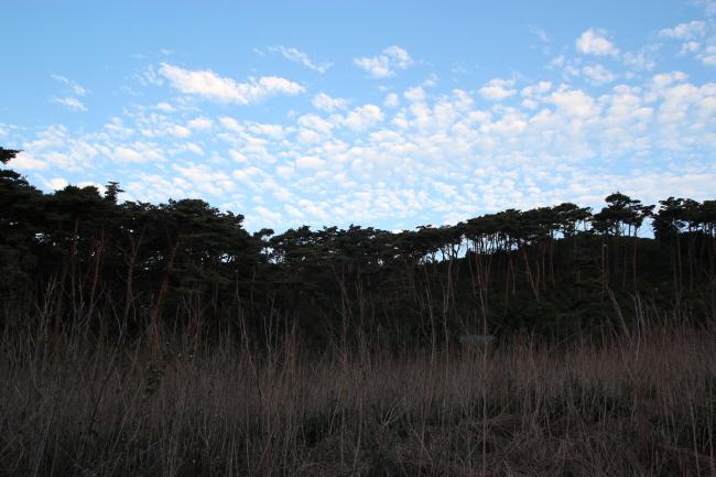 곧게 뻗은 나뭇가지들이 도저히 가만히 있을 수 없는 모양입니다. 저마다 생긴 대로 춤을 춥니다.