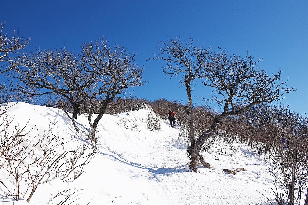 계방산 정상 오르는 길 계방산 정상부에 근접하면 길 양쪽의 두 나무가 팔을 벌려 잘 왔다고 환영 인사를 하는 듯하다.