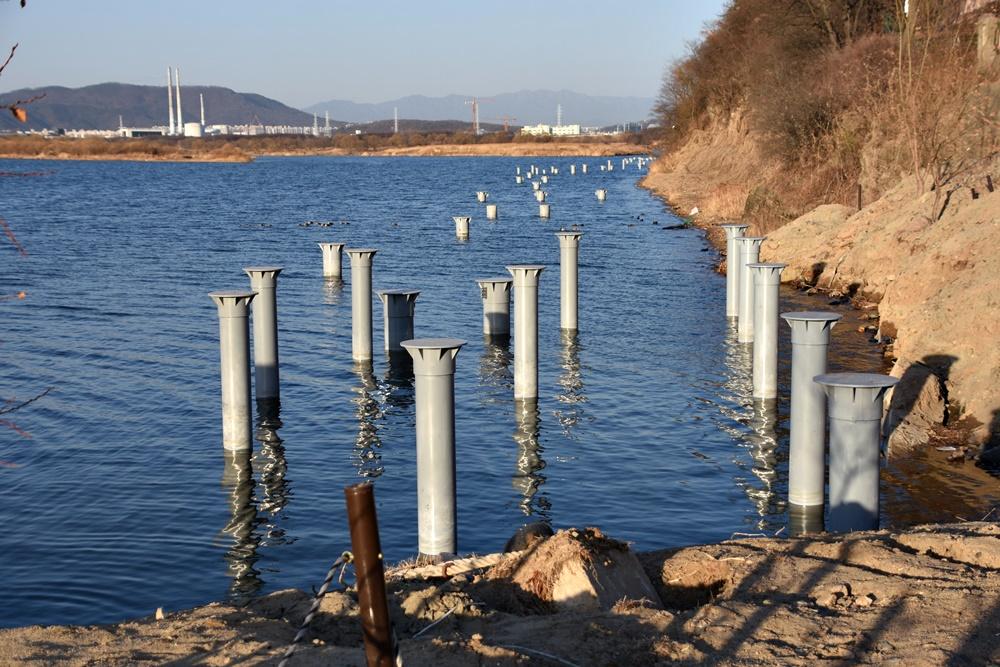 대구 달성군이 화원동산 하식애 앞 낙동강 안쪽으로 강철 파일을 박아 탐방로 공사를 강행하고 있다.