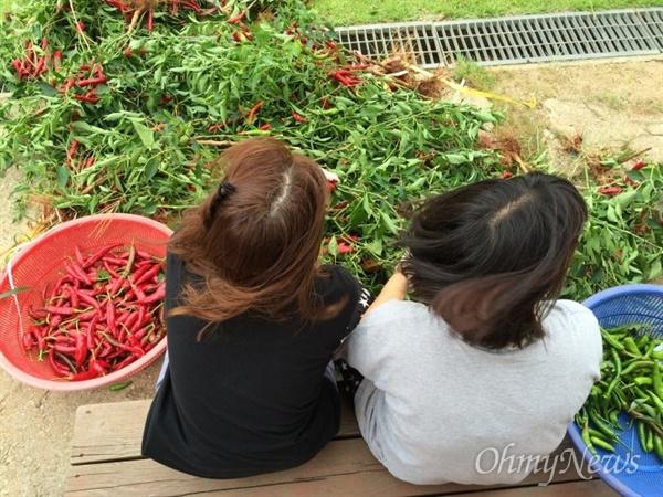 꿈틀리인생학교에선 친환경 농법으로 채소밭엣 직접 먹을거리를 기르고 논에서 벼농사도 짓는다.