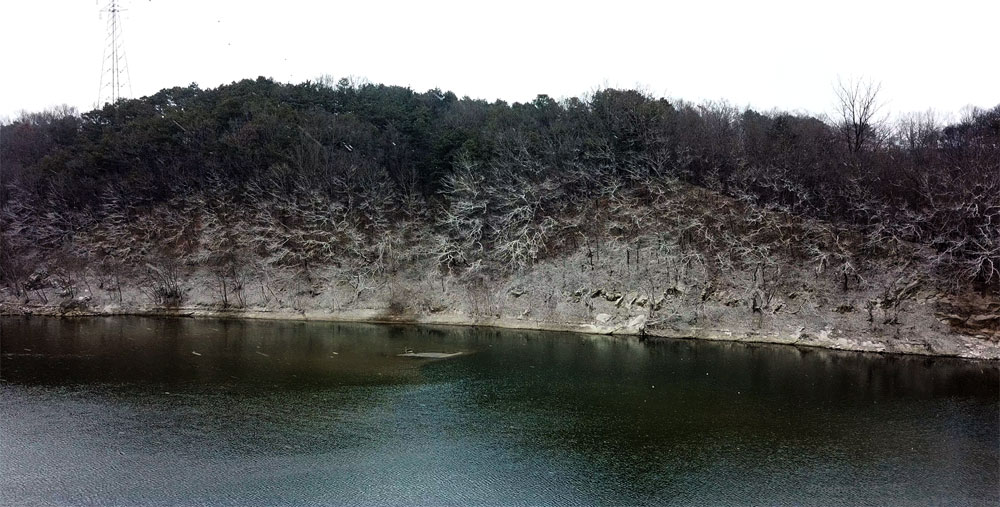 미호천에서 흘러내리는 세종시 연동면 합강리 강변 나무들이 미국선녀벌레 공격을 받아 하얗게 죽어가고 있다.