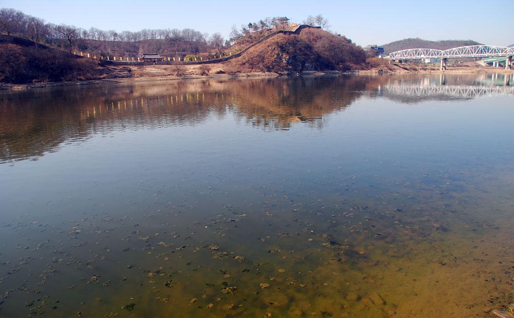 유네스코 세계문화유산인 사적 제12호 공산성이 바라다보이는 강물에 녹조류 사체가 둥둥 떠오르고 있다.