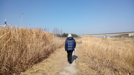 순천만 산책 모처럼 화창한 날이라 좌담 전 송 교수가 순천만 갈대밭 산책에 나섰다. 그는 이 길을 산책하며 가장 큰 종교적 황홀경을 체험한다며 이 길에서 죽고 싶다고 하였다.