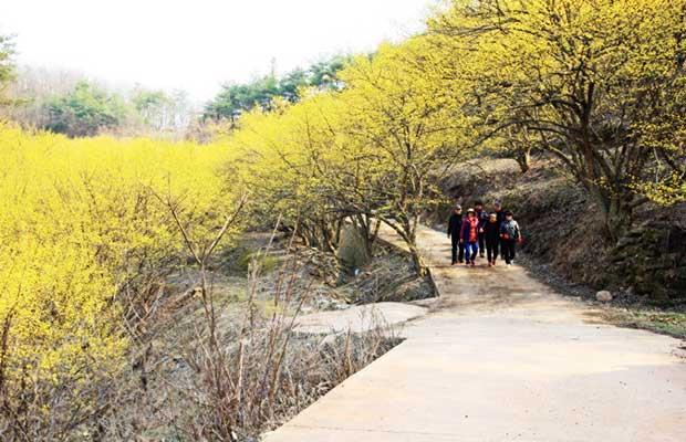 의성군 사곡면에 위치한 산수유 꽃피는 마을
