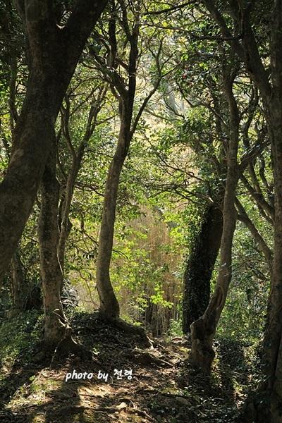 세연정 개울가 언덕  담이 아닌 숲과 언덕이 그대로 울타리가 되었다.