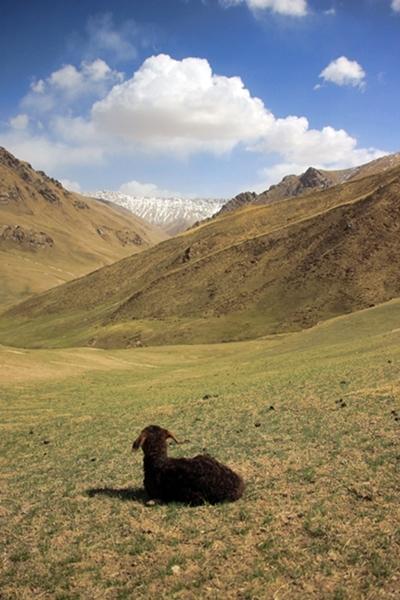 외로워라 이 내몸은 뉘랑 함께 돌아갈꼬 키르기스스탄 나린에서 혼자 설산을 바라보는 아기양이 당시 내 심경과 비슷했다.