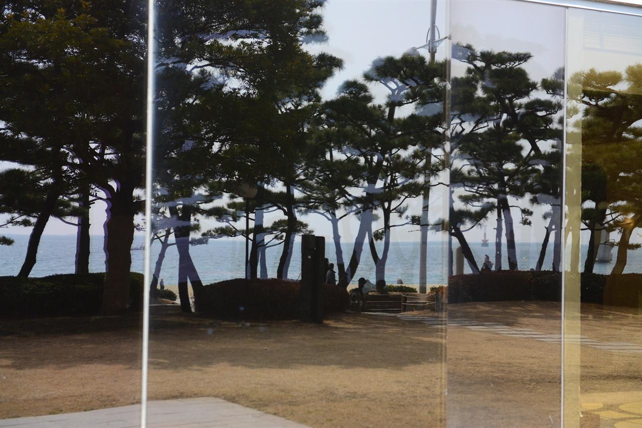 소나무 해변을 따라 길게 조성된 소나무 숲, 동백섬까지 이어진다.