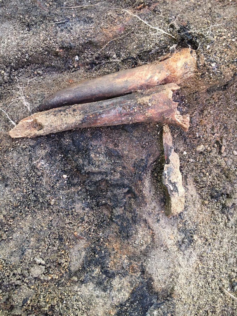 아산시 배방면 중리마을 뒷산 폐금광 유해발굴 현장에서 발굴된 불에 그을린 유해. 불에 탄 옷감이 달라 붙어 있다.