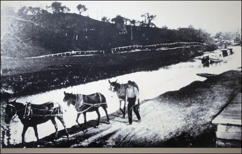 미국 오하리오-이리 운하의 과거 모습. 노새 3필이 배를 끌고 있다.