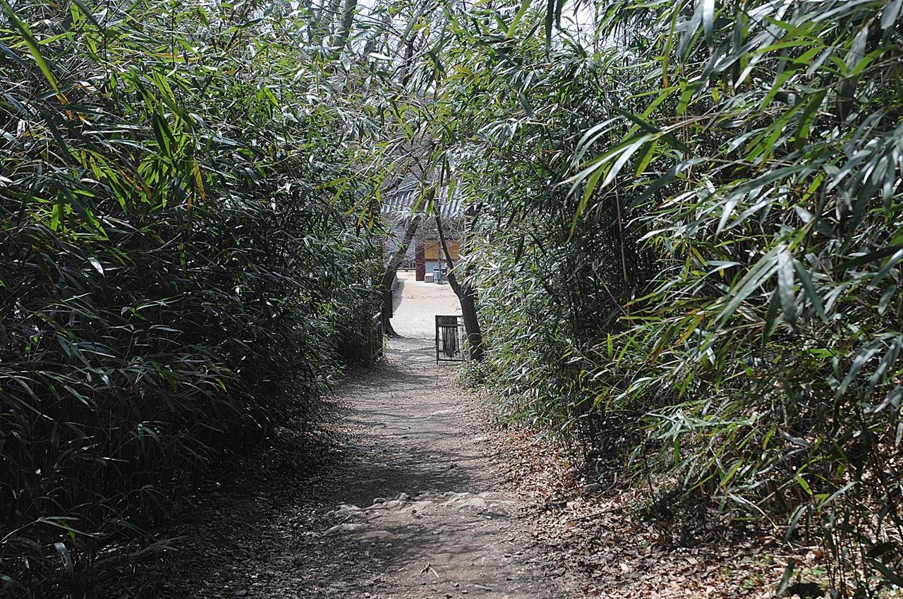 길상암 가는 길  화엄사 뒤편 구층암과 길상암 가는 길에는 이렇게 운치 있는 대나무 숲길이 있다.