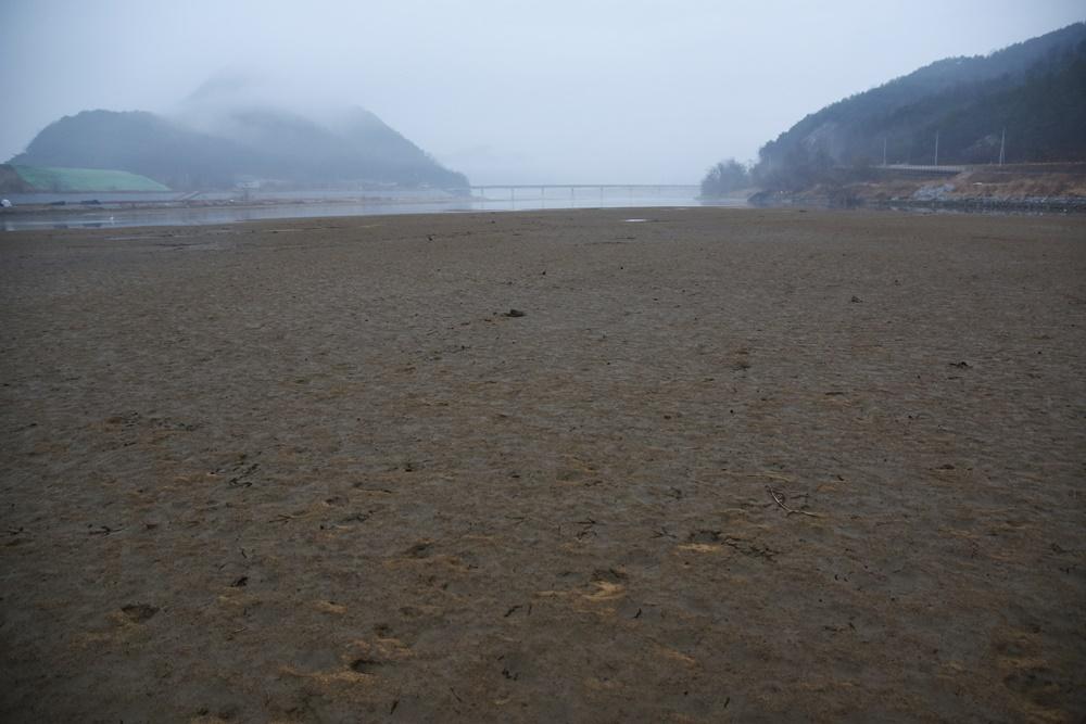 상주보 수문을 열자, 영강 합수부 바로 위 낙동강에 드넓은 모래톱이 되돌아왔다. 낙동강이 살아나고 있다.