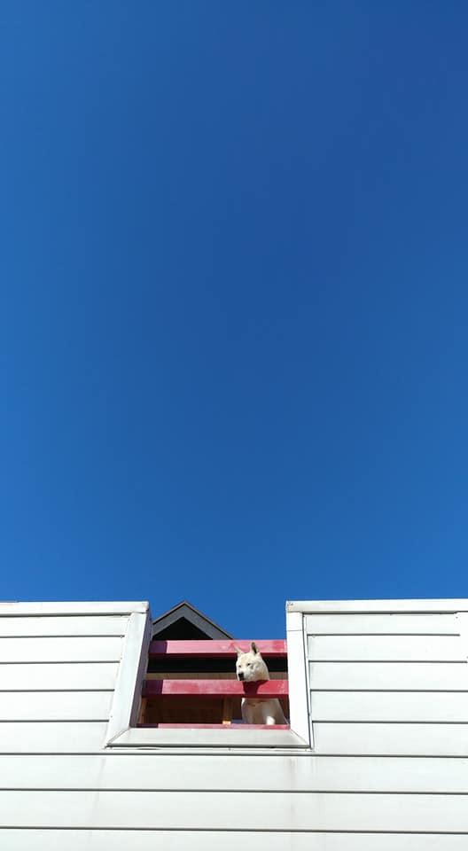 이 하늘빛을 과연 '푸른' 하늘이라 해야 할까, '파란' 하늘이라 해야 할까 ·