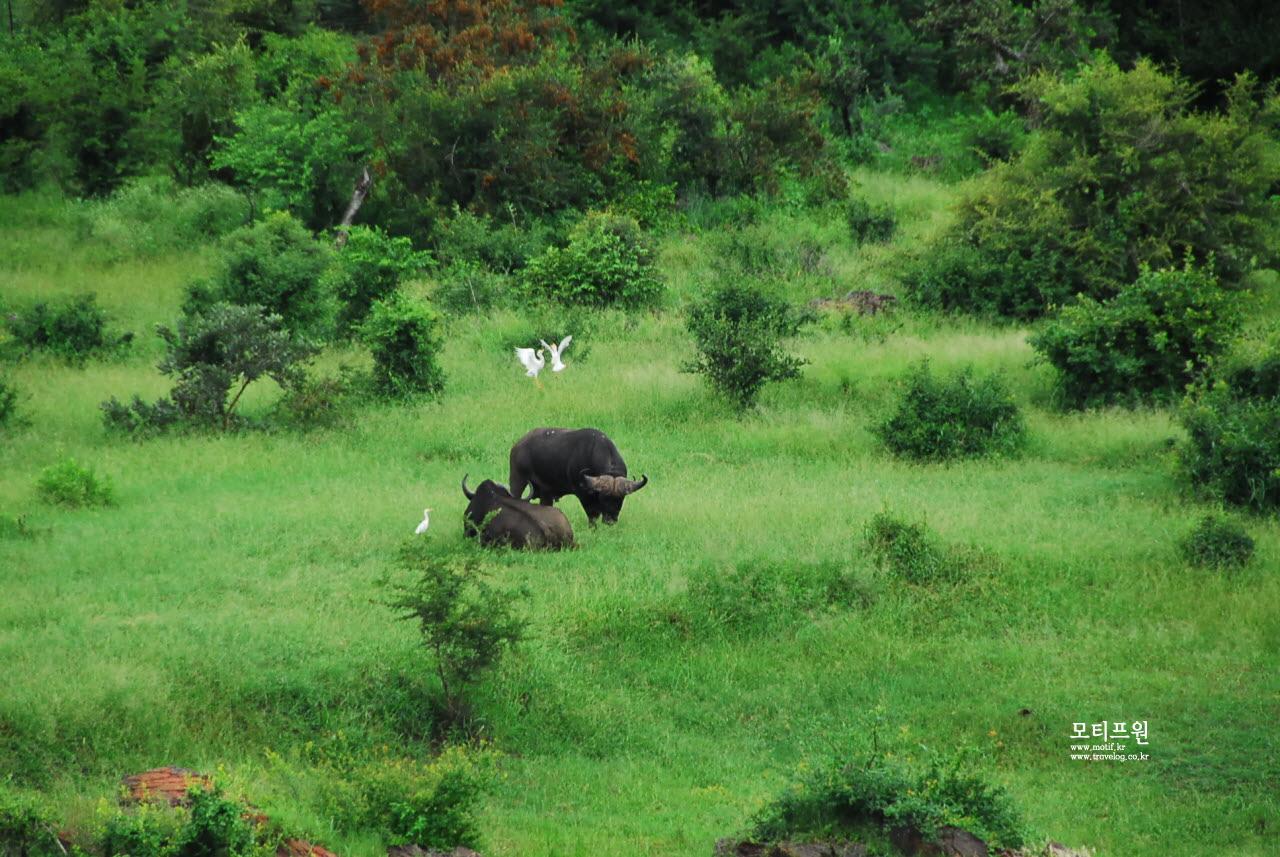 야생의 위대한 평화는 어떤 생물도 창고를 만들지 않는 것에서 비롯되고 있었다.